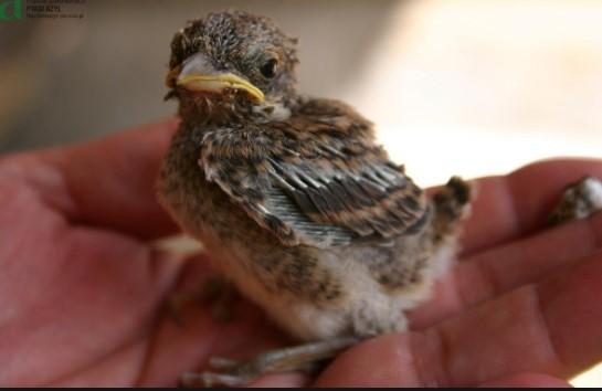 Dwa maluchy znaleziono w rozgrzanej w upale budce dla ptaków. Wzruszający przykład ludzkiej dobroci