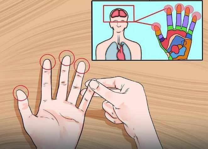 Gdzie znajdują się receptory, które odpowiadają określonym częścią ludzkiego ciała?