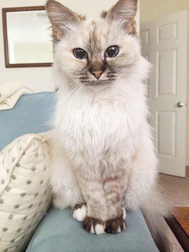 Dwadzieścia starych kotów, które zostały przygarnięte przez ludzi z wielkim sercem