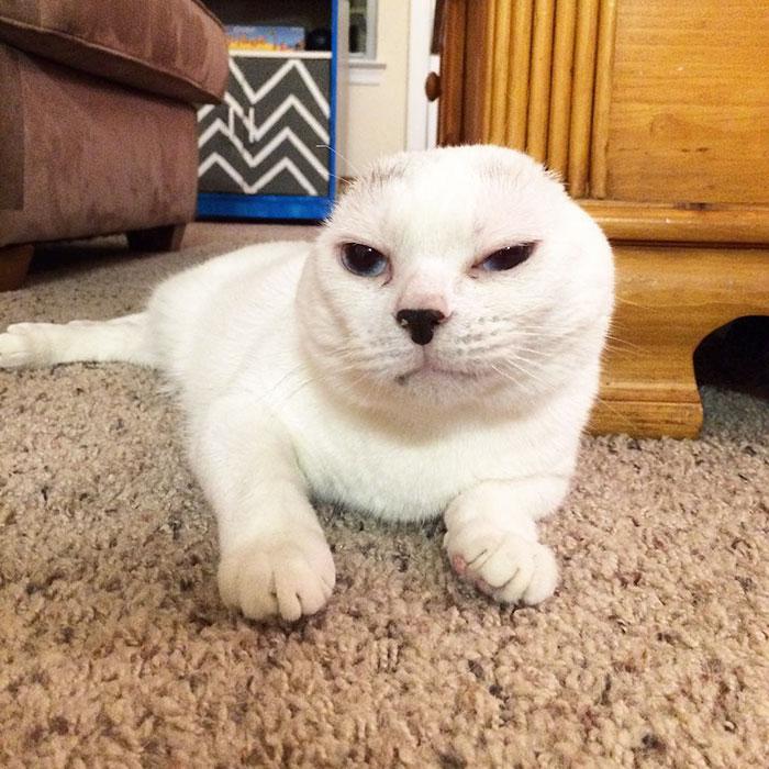 Kobieta zaadaptowała głuchego bezuchego kota, którego wszyscy ignorowali, a później ją uratował