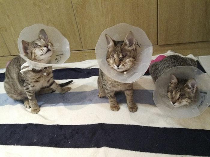 Nikt nie chciał ślepych kociąt ze schroniska, dopóki pewna kobieta nie postanowiła zaopiekować się całą trójką