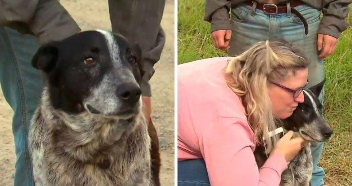 Stary, głuchy i pół ślepy pies stał się prawdziwym bohaterem, ponieważ potrafił uratować 3-letnią dziewczynkę w warunkach dzikiej przyrody