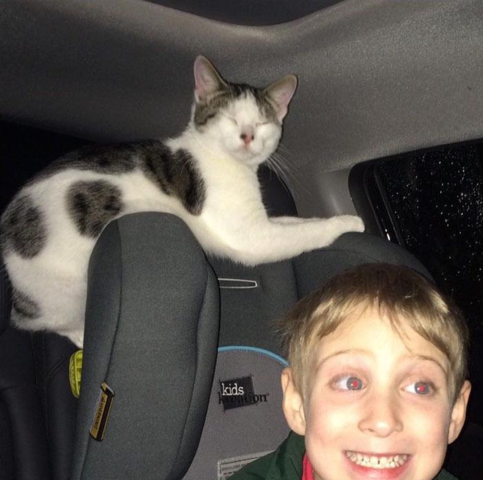 Uratowany kot zrobił coś niezwykłego. Wszyscy internauci byli zachwycone