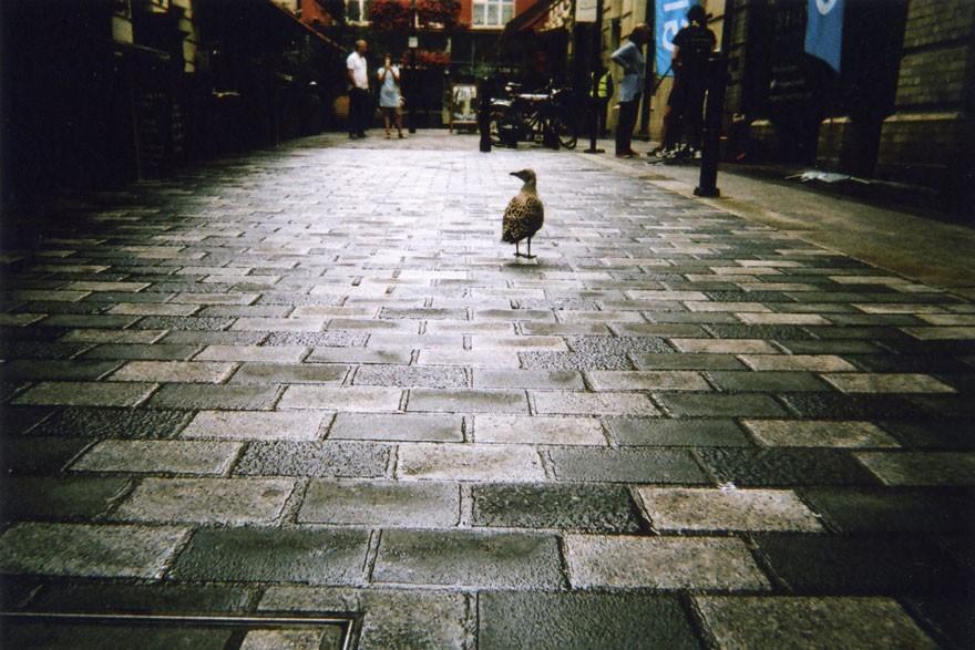 Bezdomnym w Londynie rozdano 100 aparatów fotograficznych, i oto co z tego wyszło