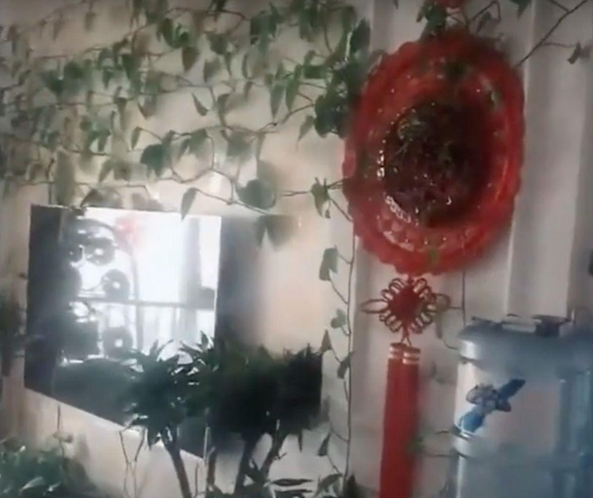 Mężczyzna poprosił brata, aby podlewał rośliny, które zostawił w pustym mieszkaniu, ale kiedy wrócił, czekała na niego ciekawa niespodzianka