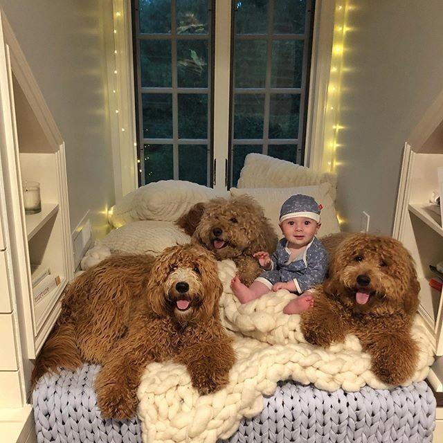 Przyjaźń dziecka i trzech psów poruszyła użytkowników sieci