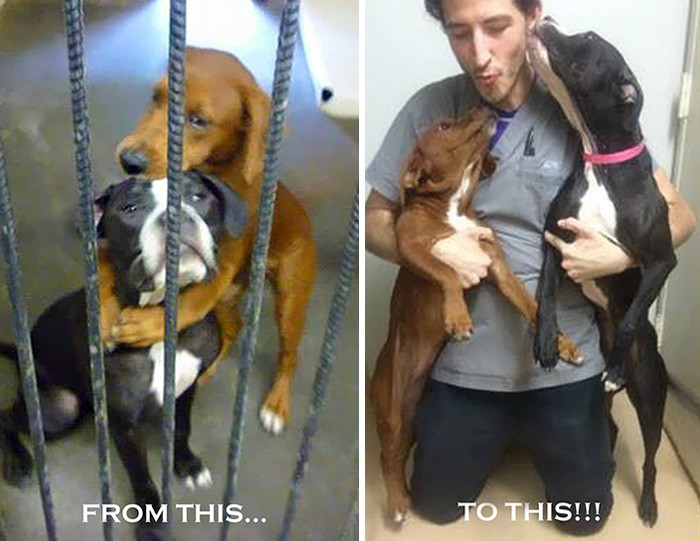 Psy przytulały się nawzajem przed pożegnaniem ze światem i uratowało to im życie