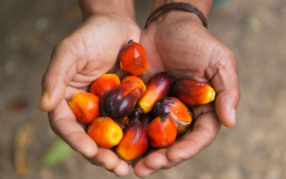 Obalamy mity na temat oleju palmowego