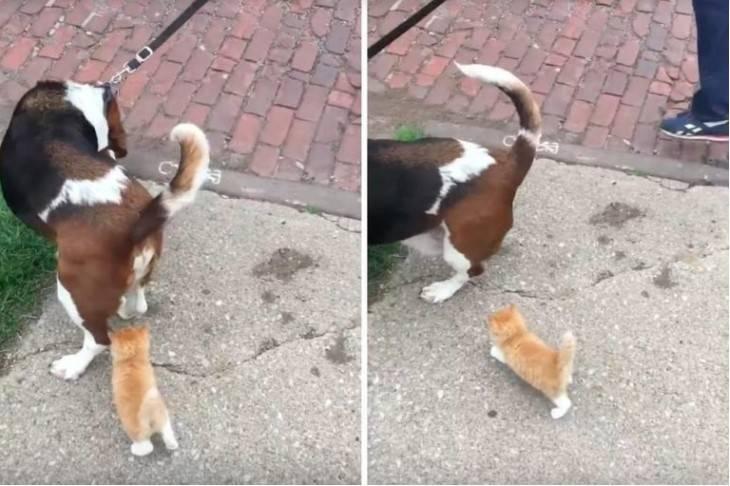 Bezdomne kocię dogoniło mężczyznę, spacerującego z psem, i podążyło za nim