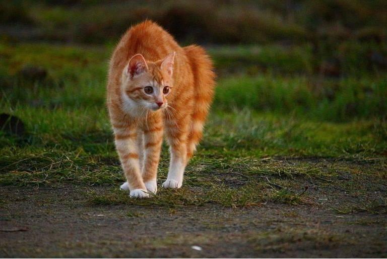 Dlaczego koty boją się ogórków