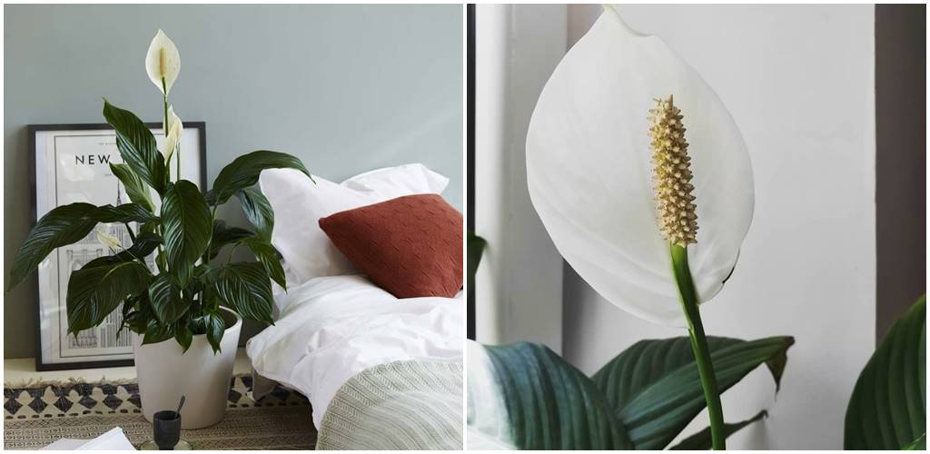 Dziesięć roślin zapewniających idealny mikroklimat w domu