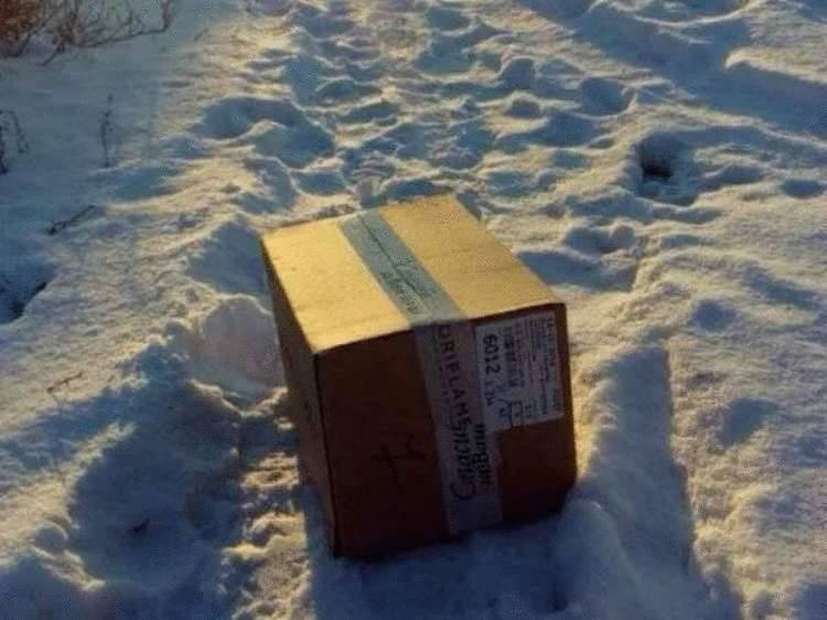 Kotka przyszła prosić ludzi o pomoc, jej kocięta zamarzały w pudełku