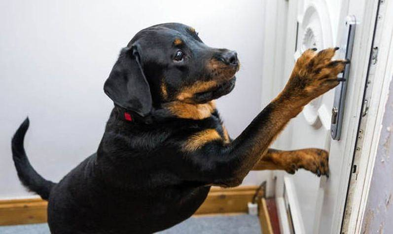 Pies uratował życie swojego właściciela, otwierając drzwi ratownikom medycznym