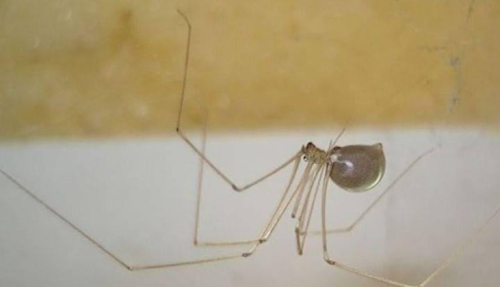 Entomolog wyjaśnił, dlaczego nie wolno wyrzucać pająków z domu